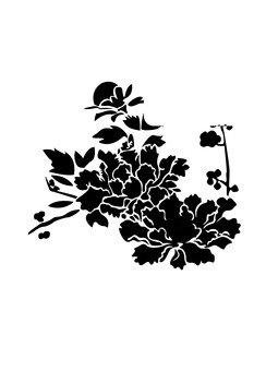 peônia folha