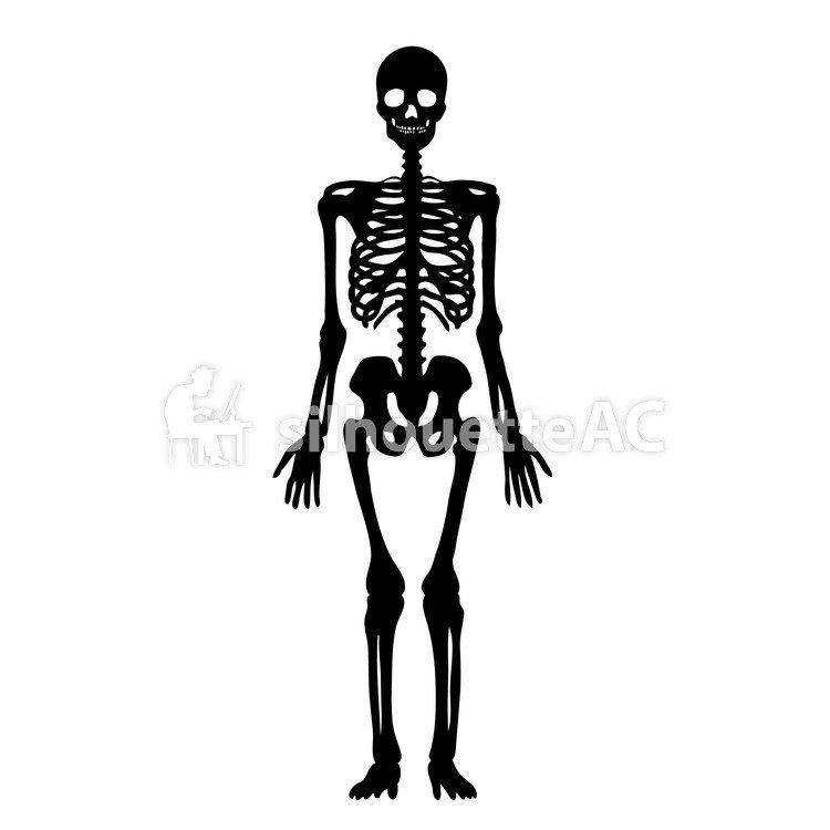 Vector de silueta libre : el cuerpo, lesión, remo, cráneo, hueso ...