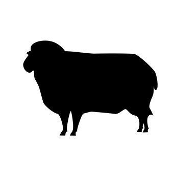 con cừu
