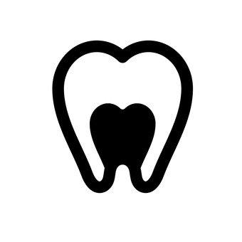 치아의 단면