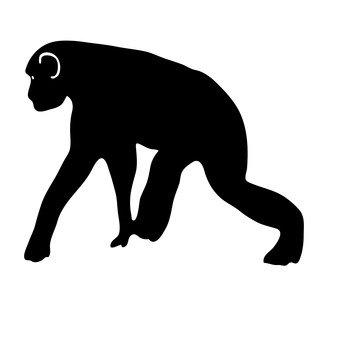 Affen