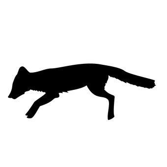 Una volpe