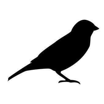 Дикая птица