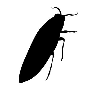 비단 벌레