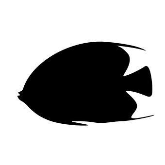 해양 물고기