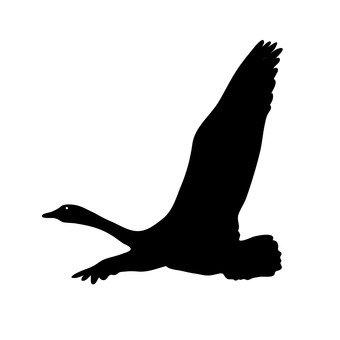chim thiên nga