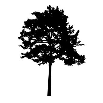 लकड़ी