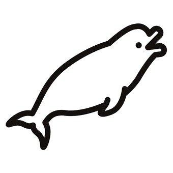 흰 돌고래