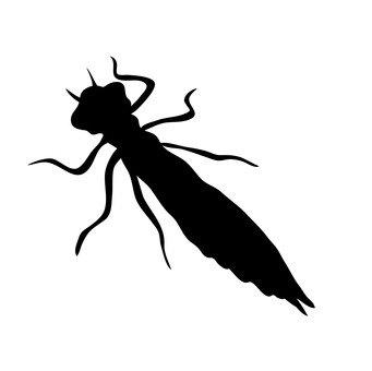 larve di libellula