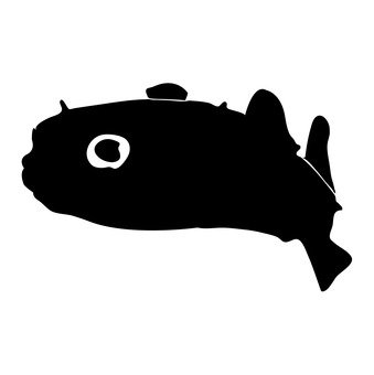 Deep-sea fish