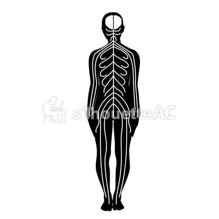 Vector de silueta libre : el cuerpo, pictograma, monótono, diagrama ...