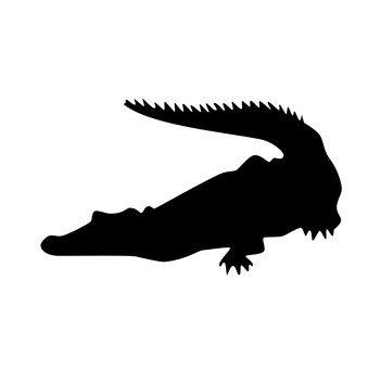 Con cá sấu