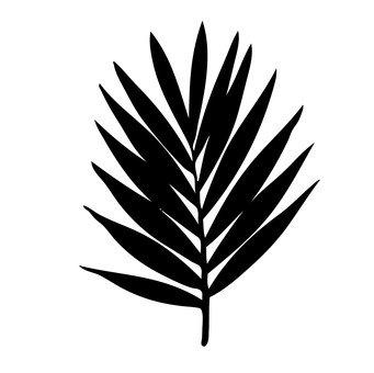 관엽 식물