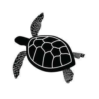 바다 거북